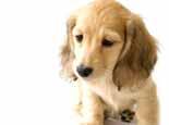 如何治疗犬细小病毒