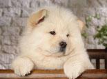 让宠物狗狗变胖的四个原因