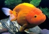 观赏鱼用药施药的方法