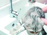 猫咪使用香波的注意事项