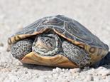 预防龟龟多种疾病的方法