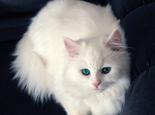 女生适合养什么品种的猫