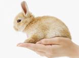 如何跟新兔子培养感情