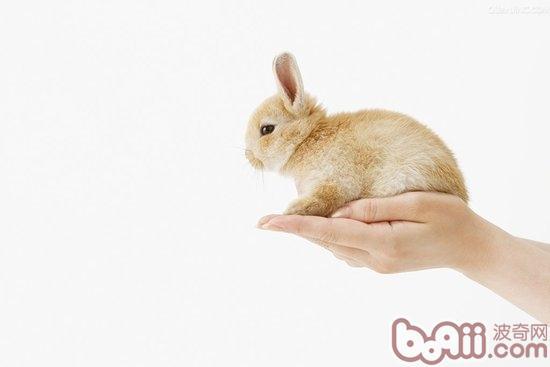 会把野兔摸死是吗?
