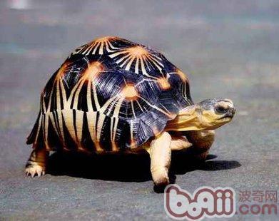 还是 水龟/现在选着养龟的人越来越多了,但是养水龟好还是养旱龟好呢?...