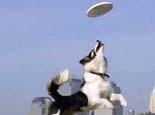 三大原因导致狗狗训练失败