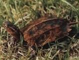 夏天水龟晒背的注意事项