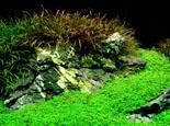 水族造景中岩石种类的介绍