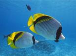 怎样预防鱼类的寄生虫