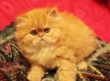 哪些食物需谨慎喂饲猫猫