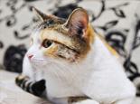 怎么才能让猫咪不吃蟑螂