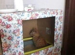 自制简单猫厕所的方法