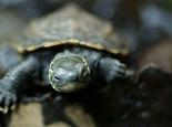 草龟喜欢吃哪些食物