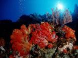 珊瑚岩礁生态造景缸介绍