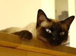 猫为什么会喜欢呆在高处