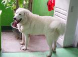 中型犬的健康饲养管理办法