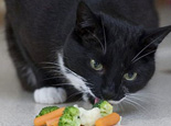 猫可不可以吃水果