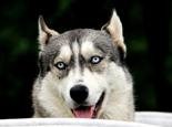 狗狗饲料中各种物质的作用