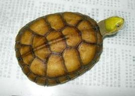 如何预防龟龟疾病的发生