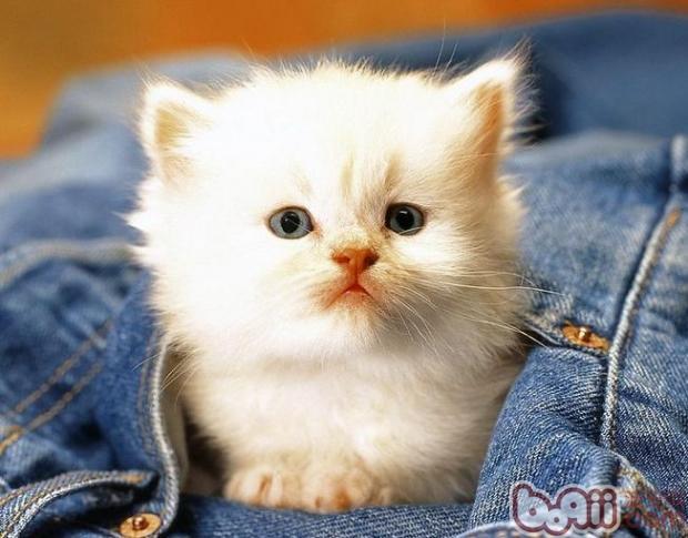 宠物猫、宠物狗,小孩子等等,在出生后的一段时间内都是闭着眼睛的。它们会用身体的每一寸皮肤去感受这个鲜活的世界,但是要让眼睛睁开还得花费几天的功夫。当然,每个生物出生后睁眼的时间都是有差别的,针对猫咪来说,在出生后大概多长时间能睁开眼睛呢?一起来了解下咯:   临床研究发现,幼猫在出生后到睁开眼睛一般需要8天左右的时间,而且此时猫咪的眼睛还不是完全睁开的,要等到猫咪完全睁开眼睛,一般要到出生后的14-15天左右。此外,不同品种的猫咪睁开眼睛的时间长短也不一样,比如说,短毛猫一般比长毛猫睁眼要早。   在