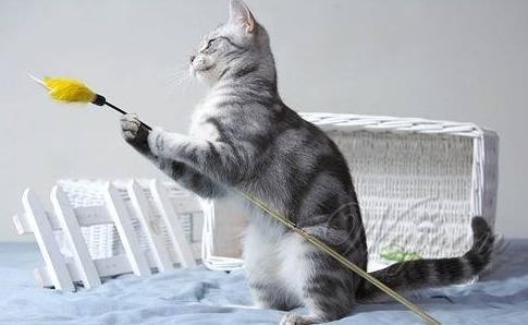 逗猫棒的制作方法和步骤|猫咪技巧训练-波奇网百科大全
