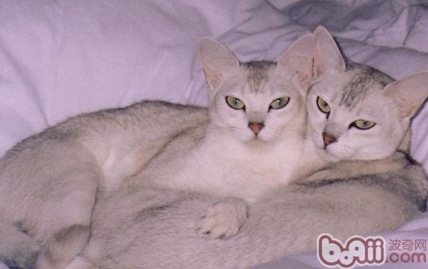 壁纸 动物 猫 猫咪 小猫 桌面 620_390