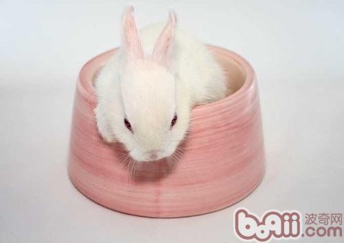 兔子 可爱/宠物兔