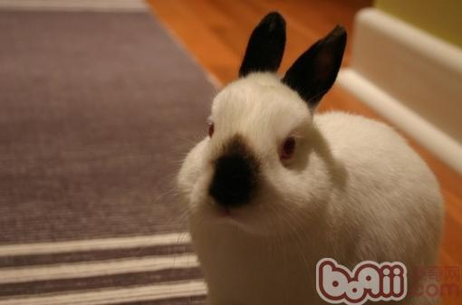 兔子腹泻怎么处理