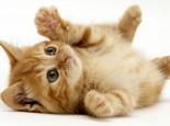 刚出生小猫怎么人工喂养