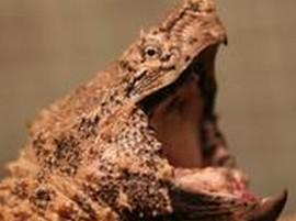关于观赏龟的饲养和产卵量