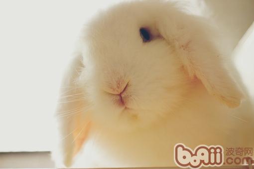 如何帮兔子洗澡图片