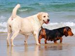 夏天带狗去海边的几大好处