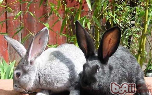关于 宠物/宠物兔