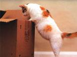 母猫生殖系统常见疾病