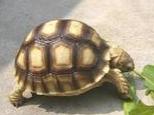 怎么看出龟龟的年龄