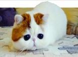 猫猫爱舔毛的原因你了解吗