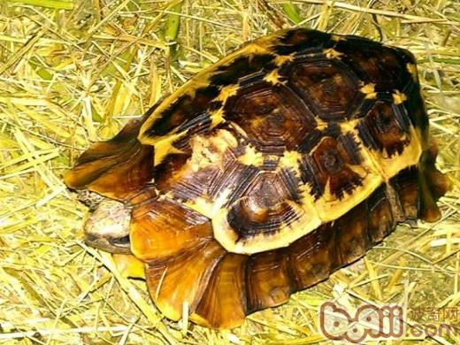 池卫生/建造龟池时,既要考虑龟池的式样美观、使用方便、还要考虑到龟...