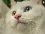 猫胡子为什么总是会断