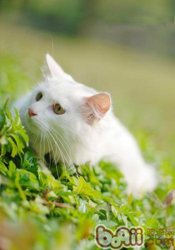皮肤炎会潜伏,刚购买的小猫咪,活泼可爱,全身毛绒绒的,你无法判定