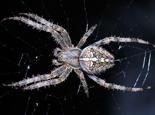 蜘蛛毒素的常见分类有哪些