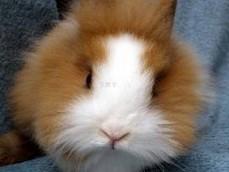 夏天兔兔的蚊虫叮扰的问题