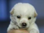 如何为幼犬打疫苗
