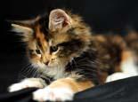 主人如何应对猫咪坏脾气