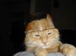 猫咪挑食的原因分析