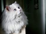 老年猫咪的护理方法