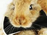 兔兔身体的皮肤构造