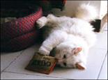猫咪对矿物质的需求简介