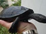 龟龟繁殖需要的条件