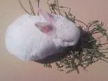如何挑选一只不挑食的兔子