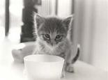 如何判定猫咪是否健康